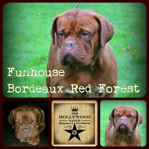 funhousebordeauxredforest